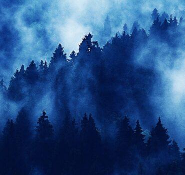 Το Δάσος που βρυχάται
